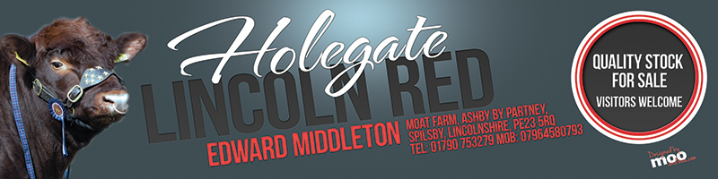 May Holegate banner